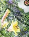Foulard tour de cou en soie Jardin de Powis