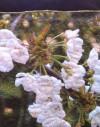 Kit Sac en Lin fleurs de cerisier